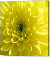 Yellow Luminosity  Canvas Print