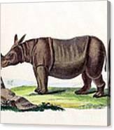 Javan Rhinoceros, Endangered Species Canvas Print