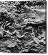 Jaw Bone B W Canvas Print