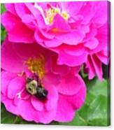 Jc And Bee Canvas Print
