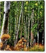 Jebediah Smith Wilderness Walk 2016 Canvas Print