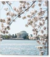 Jefferson Memorial Blossoms Canvas Print