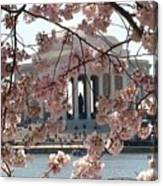 Jefferson Through The Cherry Blossoms Canvas Print