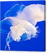 Jellies In Jellyfish Tank In Monterey Aquarium-california Canvas Print