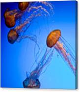 Jelly Fish Iv Canvas Print