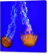 Jellyfish Art Canvas Print
