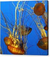 Jellyfish Family Canvas Print