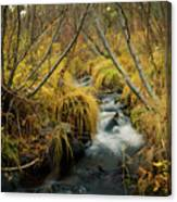 Jenny Creek In Autumn Canvas Print
