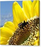 Jerome Bees Canvas Print