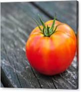 Jersey Fresh Garden Tomato Canvas Print