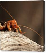 Jerusalem Cricket On Textured Log Canvas Print
