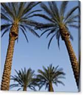 Jerusalem Palms Canvas Print