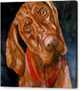Jesse The Vizsla Canvas Print