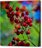 Jessies Berries Canvas Print