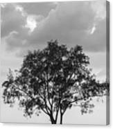 Jetty Tree Canvas Print