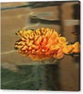 Jewel Drops - Orange Chrysanthemum Bloom Floating In A Fountain Canvas Print