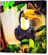 Jewel Of The Amazon Toco Toucan  Canvas Print