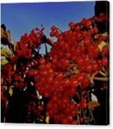 Jewels Of Autumn 4 Canvas Print
