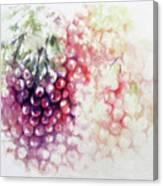 Jewels On The Vine Canvas Print