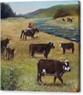 Jim's Cattle Canvas Print