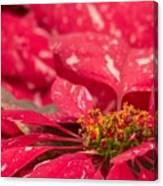Jingle Bells 3 Poinsettia Canvas Print