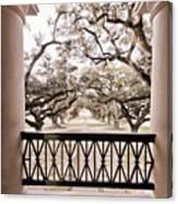 Josephine's View Of Oak Alley Plantation Canvas Print