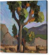 Joshua Tree 2 Canvas Print