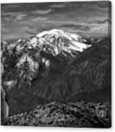 Joshua Tree At Keys View In Black And White Canvas Print