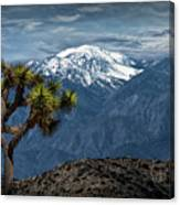 Joshua Tree At Keys View In Joshua Park National Park Canvas Print