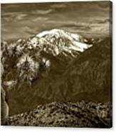 Joshua Tree At Keys View In Sepia Tone Canvas Print