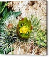 Joshua Tree Cactus Bloom II Canvas Print