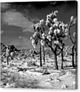 Joshua Trees In Snow Canvas Print