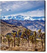 Joshua Tree National Park 2 Canvas Print