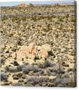 Joshua Tree National Park - Joshua Tree, Ca Canvas Print