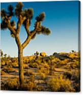 Joshua Tree Panoramic Canvas Print
