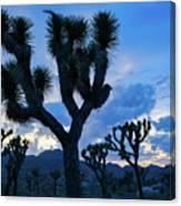 Joshua Tree Sunset Skies Canvas Print
