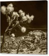 Joshua Trees And Boulders In Infrared Sepia Tone Canvas Print