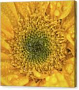 Joyful Color Nature Photograph Canvas Print