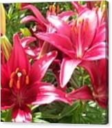 Joyful Red Lillies Canvas Print