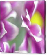 Joyful Sisters. Gentle Floral Macro Canvas Print