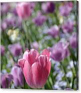 Joyful Tulip Canvas Print