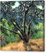 Juan Bautista De Anza Trail Oak Canvas Print