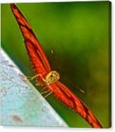 Julia Heliconian Butterfly Spreading Its Wings In Iguazu Falls National Park-brazil  Canvas Print