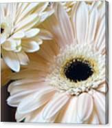 Julia's Daisy's Canvas Print