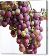 June Grapes #1 Canvas Print