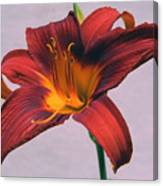 June Lily Canvas Print