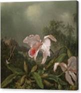 Jungle Orchids And Hummingbirds, 1872  Canvas Print