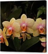 Jungle Orchids Canvas Print