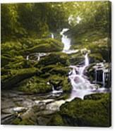 Jungle Riverflow Scene Canvas Print