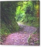 Jungle Trail Canvas Print